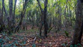 Die Spur, die mit bedeckt wird, follen Blätter in einem automnal farbigen Wald stockbild