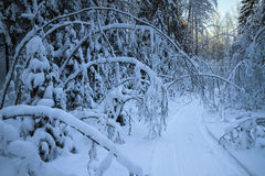 Die Spur vom Schneemobil fahrung Stockfotos