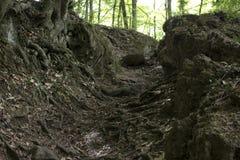 Die Spur zwischen den Felsen im Wald lizenzfreie stockbilder