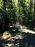 Die Spuren des Waldes führen zu eine Vorhangüberraschung Stockbild