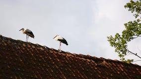 Die Störche auf dem Dach stock video