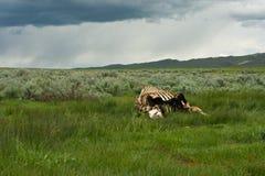 Die Stürme der Natur Stockbild