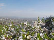 Die Stadt von Osh Ansicht vom Berg Sulaiman-Too Lizenzfreies Stockfoto