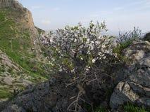 Die Stadt von Osh Ansicht vom Berg Sulaiman-Too Lizenzfreie Stockfotografie
