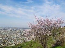 Die Stadt von Osh Ansicht vom Berg Sulaiman-Too Lizenzfreies Stockbild