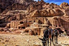Die Stadt von PETRA in Jordanien mit zwei Eseln lizenzfreies stockfoto