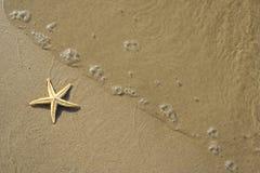 Die Starfish auf dem Strand stockbild