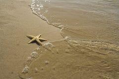 Die Starfish auf dem Strand stockfotos