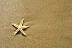 Die Starfish auf Strand lizenzfreie stockfotografie