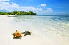 Die Starfish und das Seeshell Stockbilder
