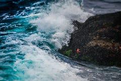 Die Starfish und die Welle lizenzfreies stockfoto