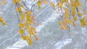 Die starken Schneefälle im Wald verzweigt sich und Blätter beeinflussen in den Wind stock video