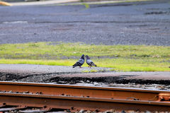 Die Station, zum miteinander Abschied zu nehmen Tauben Stockfotos