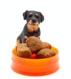 Die Statuette des Hundes mit der Nahrung des Hundes Stockbild