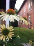 Die steigende Blume Stockbilder