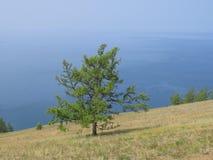 Die Steigung des Hügels, seltene Kiefer, Seeblick Landschaft-Olkhon-Insel lizenzfreie stockbilder