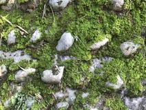 Die Steine und das Moos Stockbild