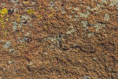 Die Steinoberfläche umfasst mit einem Moos und einer Flechte Lizenzfreie Stockbilder