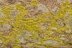 Die Steinoberfläche umfasst mit einem Moos und einer Flechte Lizenzfreie Stockfotos