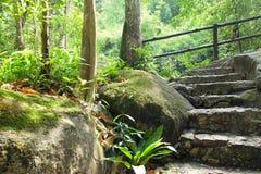 Die Steintreppe im Wald Stockfotografie