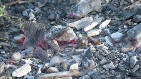 Die sterbenden Kohlen im Feuer stock video footage