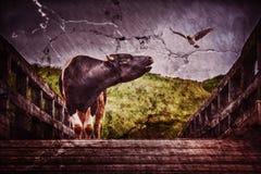 Die Stierbälge auf der Brücke Stockfoto