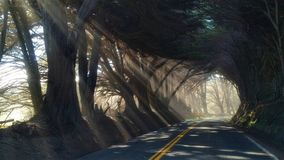 Die Straße Lizenzfreie Stockfotografie