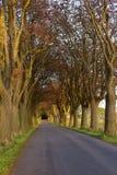 Die Straße? lizenzfreie stockfotografie