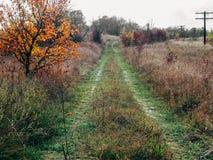 Die Straße in den Wald und in den gelben Baum Stockfotos