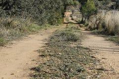 Die Straße, die fern verlässt Vektorabbildung Grünes Gras Ungepflasterte Straße Stockfoto