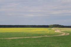 Die Straße durch das gelbgrüne Feld gegen einen dunkelblauen Himmel führt in den Abstand lizenzfreie stockfotografie