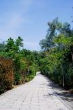 Die Straße durch das Holz Stockbild