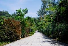 Die Straße durch das Holz Lizenzfreies Stockbild