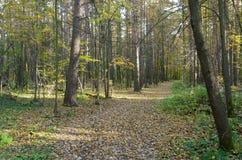 Die Straße durch den Wald lizenzfreies stockbild