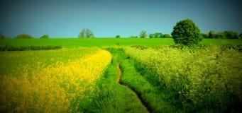 Die Straße durch die Felder stockfotos