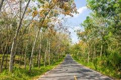 Die Straße durch die Parkbäume Lizenzfreie Stockbilder