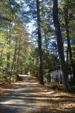 Die Straße, die durch Holz an einem sonnigen Tag in faulem Maine steigt, entspannen sich Feriendirektübertragung lizenzfreie stockfotografie