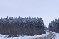 Die Straße durch Wald lizenzfreie stockfotos