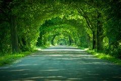 Die Straße in einem grünen Bogen der Bäume lizenzfreies stockbild