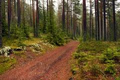 Die Straße in einem Kieferwald lizenzfreie stockbilder