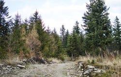 Die Straße in einem Kieferwald lizenzfreies stockfoto