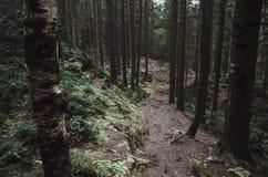 Die Straße in einem Kieferwald Stockfoto