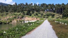 Die Straße entlang dem Reservoir mit Kokosnussbäumen im Hintergrund Stockfotografie