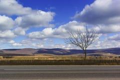 Die Straße entlang den Weinbergen und der einsame Baum im Vorfrühling Lizenzfreie Stockfotografie