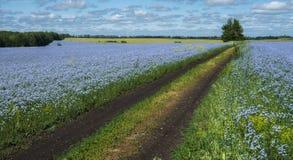 Die Straße, die die Felder des blühenden Flachses durchläuft lizenzfreie stockfotos