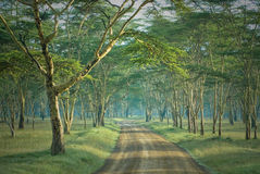Die Straße im geheimnisvollen Wald Lizenzfreie Stockfotografie