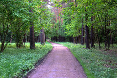 Die Straße im Holz Lizenzfreie Stockfotos