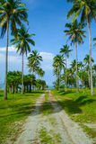 Die Straße im Kokosnussbaum lizenzfreies stockfoto