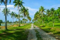 Die Straße im Kokosnussbaum stockfotos