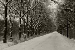 Die Straße im Park an einem Winterabend Lizenzfreies Stockbild